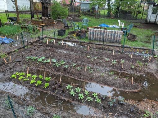garden rain 2020